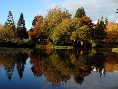 autumn ~ University of Waikato campus, Hamilton, North Island, NZ