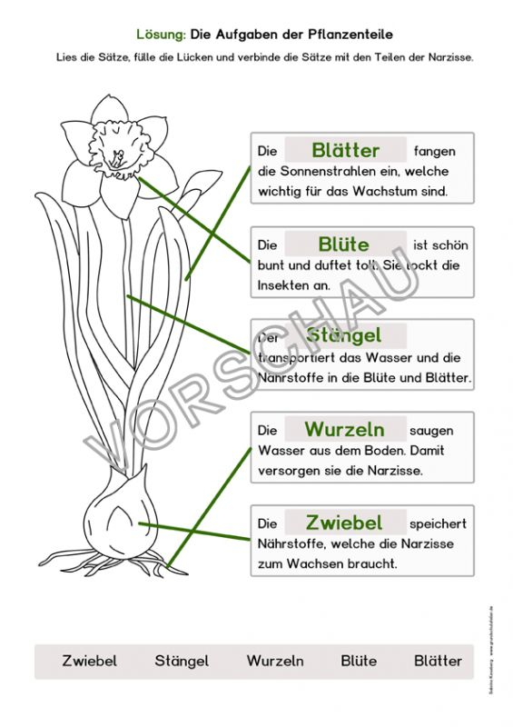 128 bästa bilderna om su på pinterest  tyska mandalas
