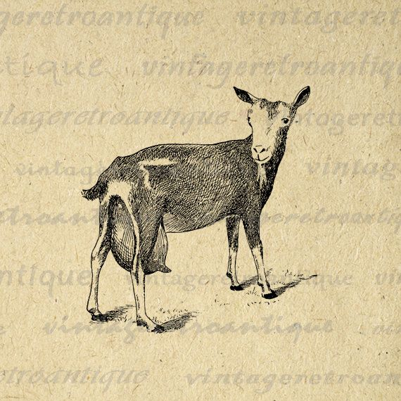 Digital Printable Little Goat Graphic Cute Farm Animal Image Download Antique Clip Art. Vintage high resolution digital image clip art for printing, fabric transfers, tea towels, pillows, tote bags, t-shirts, and many other uses. Real antique artwork. For personal or commercial use. This graphic is high quality, large at 8½ x 11 inches. Transparent background PNG version included.