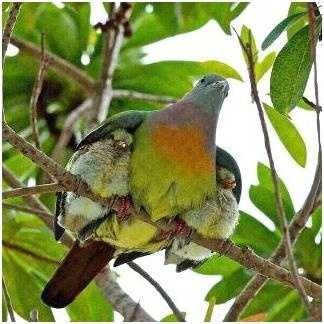 What a great mommy!: Animals, Mothers Love, Nature, Wings, Baby, Photo, Birds
