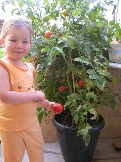 Comment faire pousser des tomates grappe sur balcon