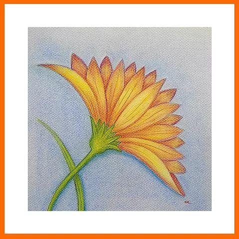Gelbe Blume  Zeichnung  Größe: 20 x 20 cm, Material: Pastelkreide, Pastellstifte