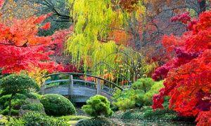 votre jardin sera color toute l 39 ann e avec ces rables japonais d 39 une toute beaut que vous. Black Bedroom Furniture Sets. Home Design Ideas