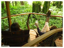 Relax at Treehouse Point