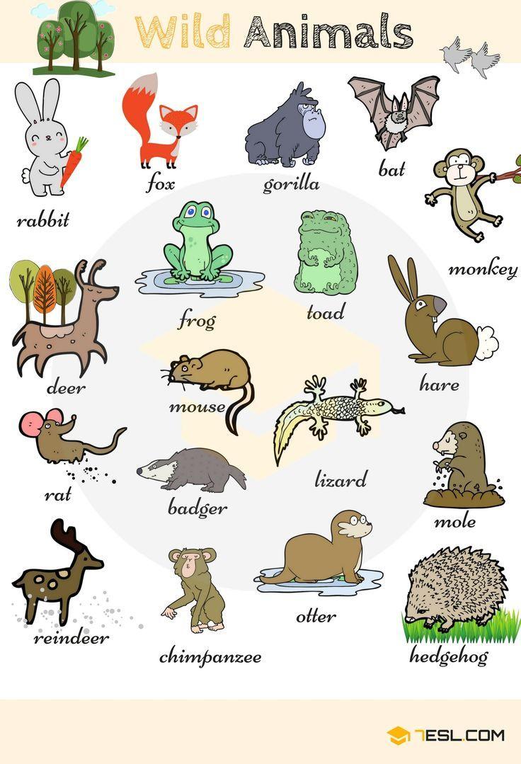 Tiernamen Tierarten Mit Liste Und Bildern Learn English Tiere Tierezeichnen Happytiere Tierarten Tiere Lustige Wildtiere