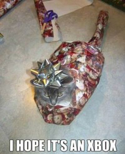That poor kitty. Yet all I can think about is Christmas Vacation.