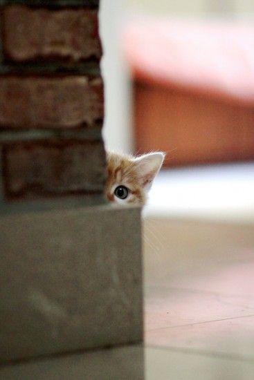 Juste un coup d'oeil . ...Va elle découvrir le poteau-rose???