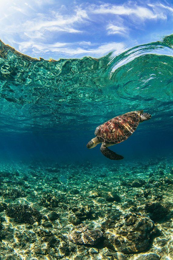 Exotic Tropical Island Beach Sea Turtle Large Poster Art Print in multiple sizes