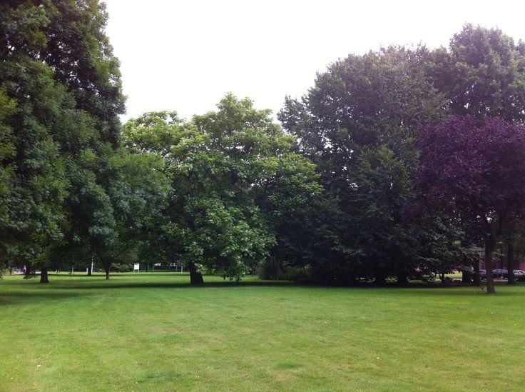 Surrounding trees