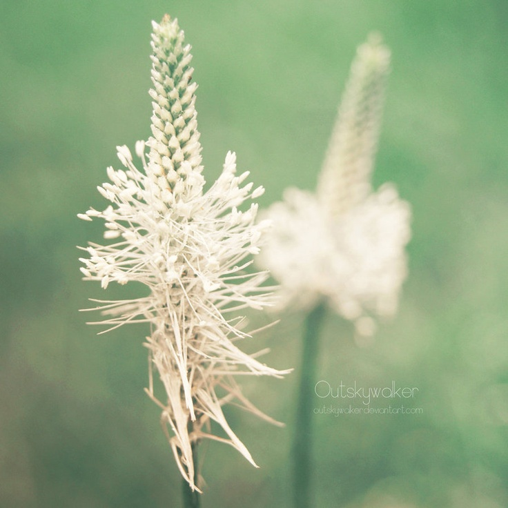 #nature #plants #foliage #Warsaw  Come, Tenderness by *outskywalker on deviantART
