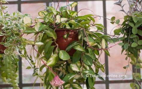 240 best plantas images on pinterest - Plantas resistentes de interior ...
