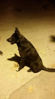 Κυκλοφορεί στη Νεάπολη Θεσσαλονίκης, περιοχή Στρεμπενιώτη σκυλάκος, καθαρός, χωρίς  λουρί, χαδιάρης και πολύ υπάκουος.
