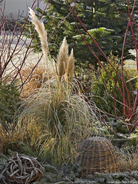 Les 25 meilleures id es de la cat gorie herbe de la pampa - Plantes qui ne craignent pas le gel ...