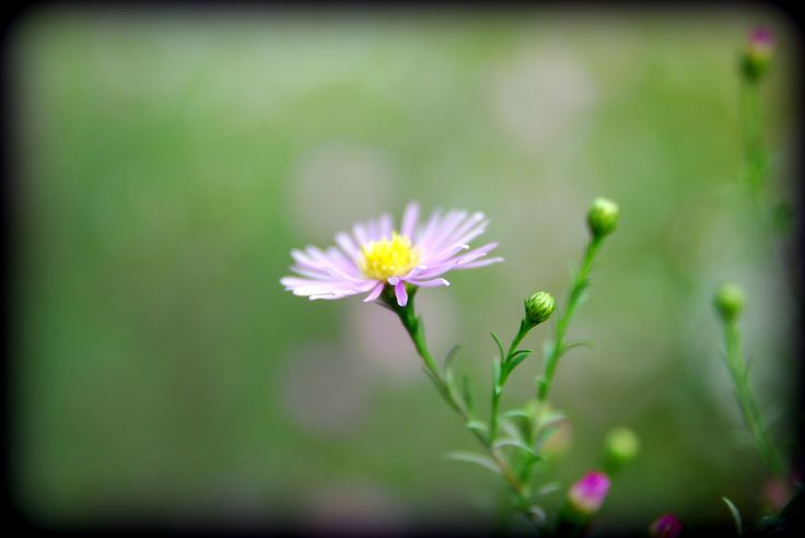 Small Beauty by Lars Green / 500px
