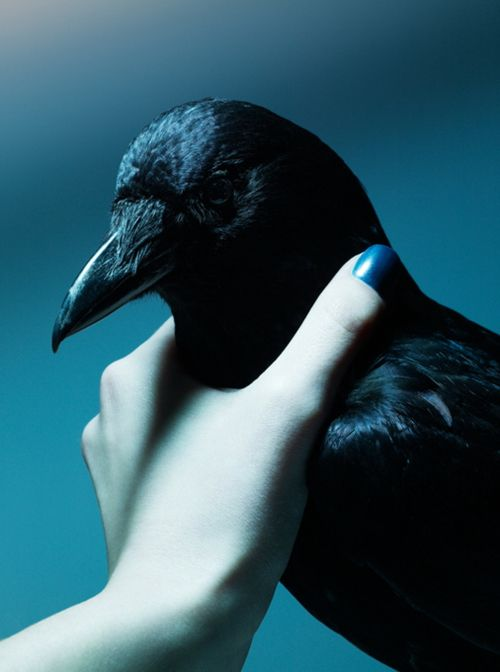 TELL ME: Why would somebody choke something as adorable as a raven?! Seriously!
