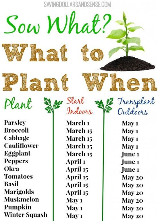 Starting your own garden can seem daunting at first. There are so many different types of vegetables, herbs, and flowers that all require different and precise care. Nobody wants to spend months of time, lots of energy and, of course, money on their plants just to find out the results are not what they expected. So, how to ensure that everything goes as planned and your garden is filled with delicious and healthy homegrown vegetables as well as beautiful flowers? Do some research and learn…