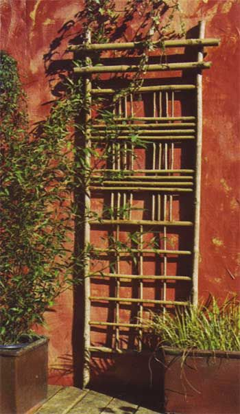Bamboo trellis for along west wall