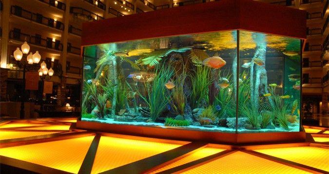 Stylish freshwater aquarium set up freshwater aquariums for Fish store austin