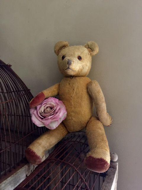 Antique Teddy Bear at Walden Woods NL