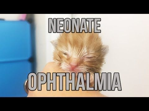 bottle feeding kittens instructions