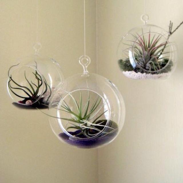 94 best Air Plants images on Pinterest | Flower, Plants and DIY