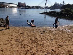 kayak hire on rozelle bay from annandale boat hire