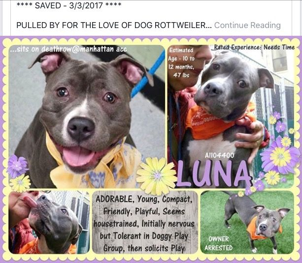 LUNA HAS BEEN SAVED BY FOR THE LOVE OF DOG, ROTTWEILER RESCUE OF NH❤️❤️❤️❤️