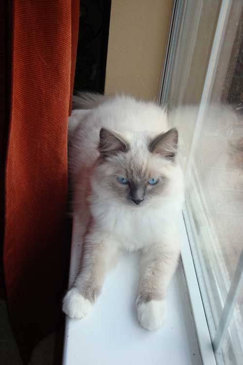 Cats, Adoption and Kittens on Pinterest