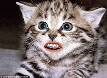 This cat. | 14 Animals With Braces That Will Make You Smile