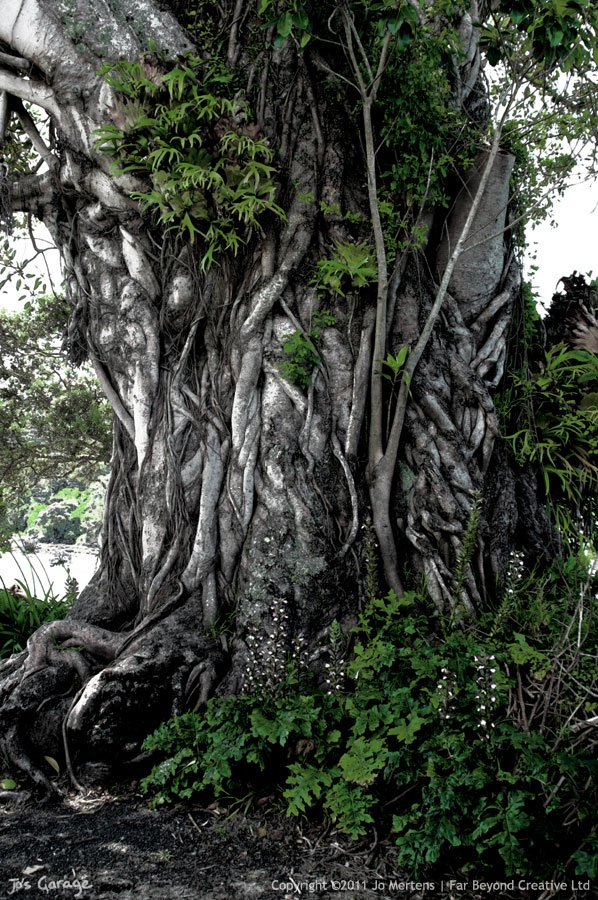 KD0525D - Ancient Tree - Copyright © 2012 Far Beyond Creative