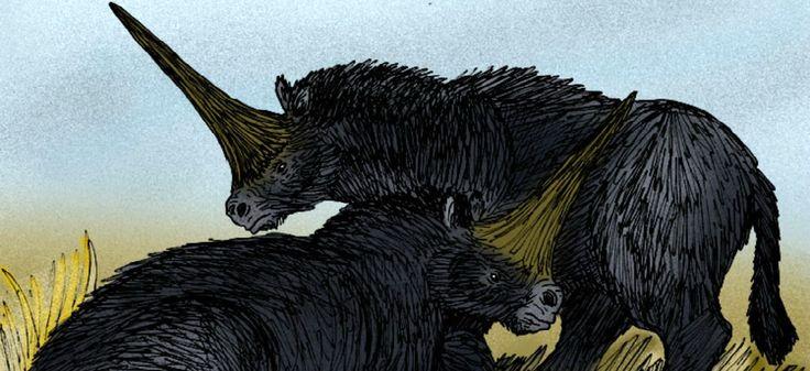 D'après de récentes découvertes, les licornes de Sibérie se sont éteintes beaucoup plus tard que ce que l'on pensait.
