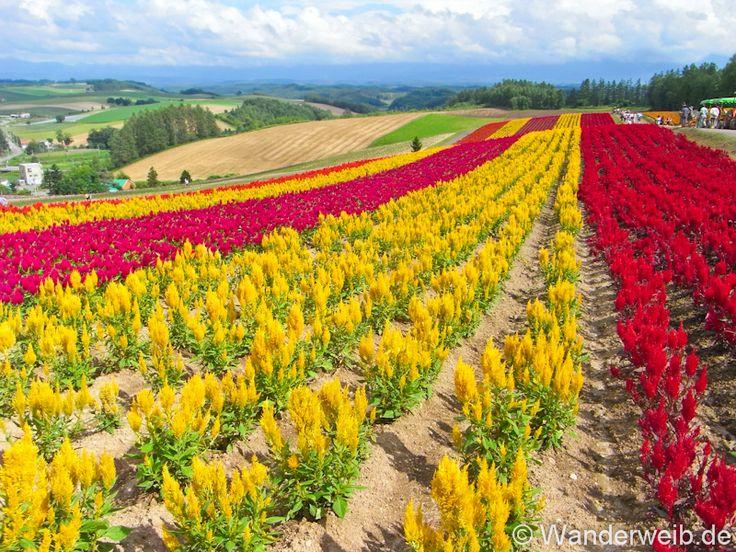 50 Dinge, die du in Hokkaido getan haben solltest! – WanderWeib