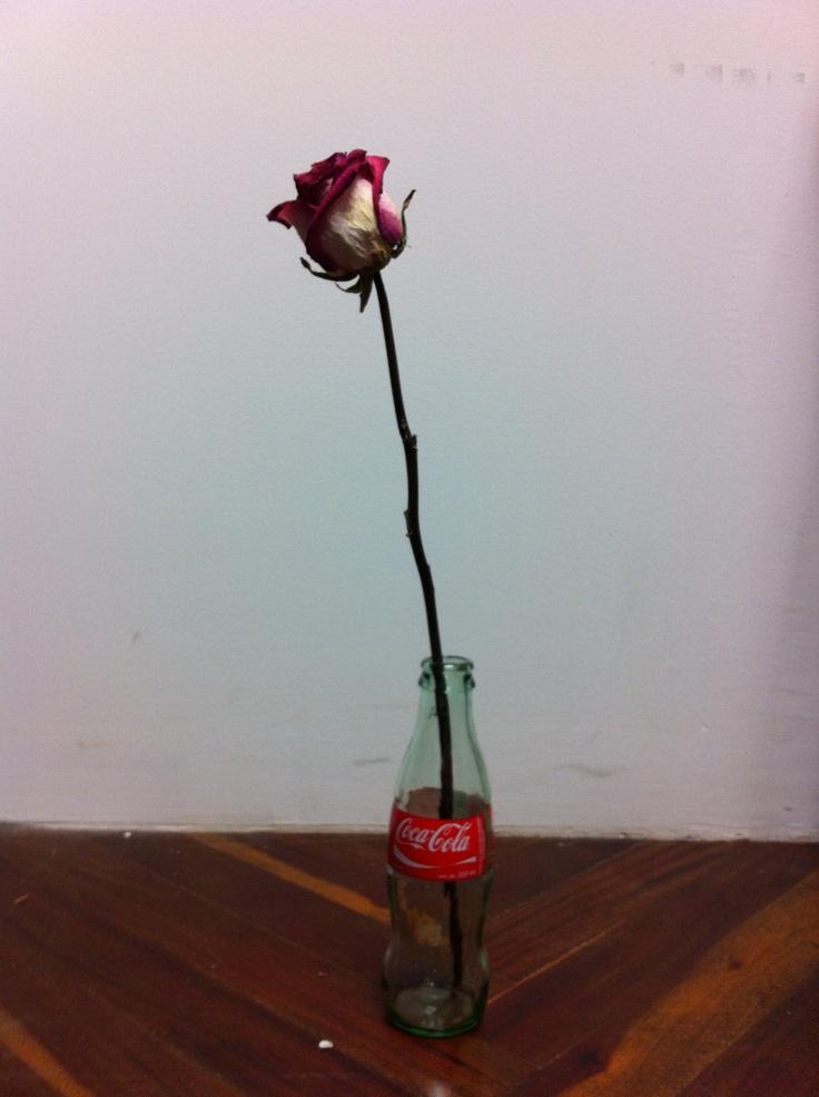 Una rosa amiga.