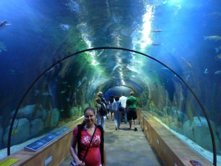 24 best beautiful places in the world images on pinterest for Aquarium valencia bar