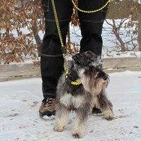 Hundkoppel och halsband av fallskärmslina