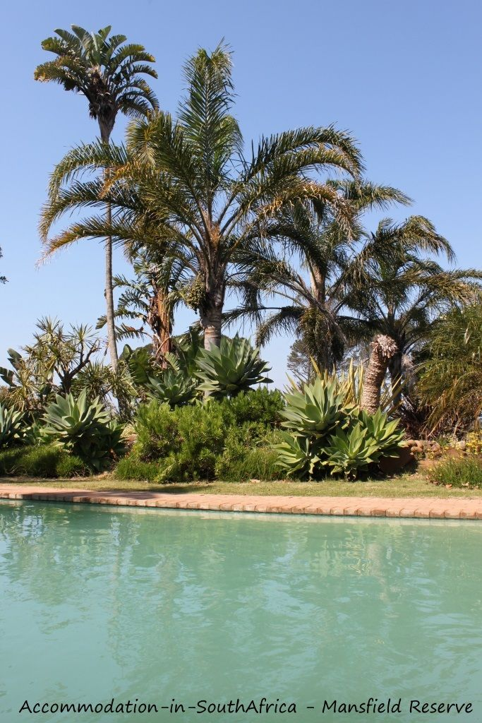 Beautiful pool at Mansfield Reserve. Port Alfred accommodation.