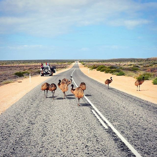 This is what a traffic jam looks like at australiascoralcoast capecoconut -
