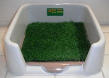 The Mini Pee Wee dog potty indoor or outdoor grass dog toilet that is your pets bathroom. The reusable grass is safe, clean replaces dog pee pads and is great for puppy training.