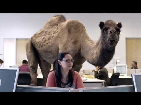 GEICO Hump Day Camel Commercial   Happier than a Camel on Wednesday... I will be doing this every Wednesday at school so get ready for it!