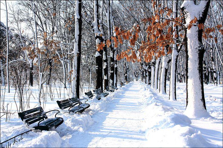 Winter Light in Herastrau Park (by Stefan Andronache)