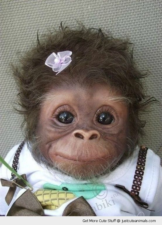 monkey chimpanzee happy smiling dressed up flower hair cute animals wild wildlife species planet earth nature pics pictures photos images