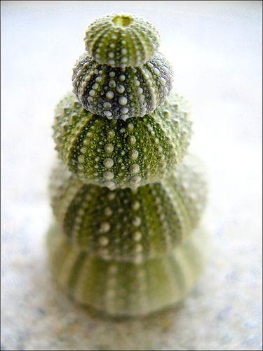 green urchins