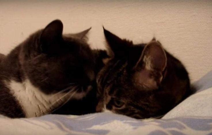 Katten zijn geweldige huisdieren, het lijkt soms wel dat ze twee modi hebben. Eentje waar ze slapen en afstandelijk zijn en eentje waarin ze super veel energie hebben en aandacht vragen. De enige manier waarop de beestjes kunnen communiceren met ons is door te miauwen. Daarom kan het af en toe lastig zijn om te …