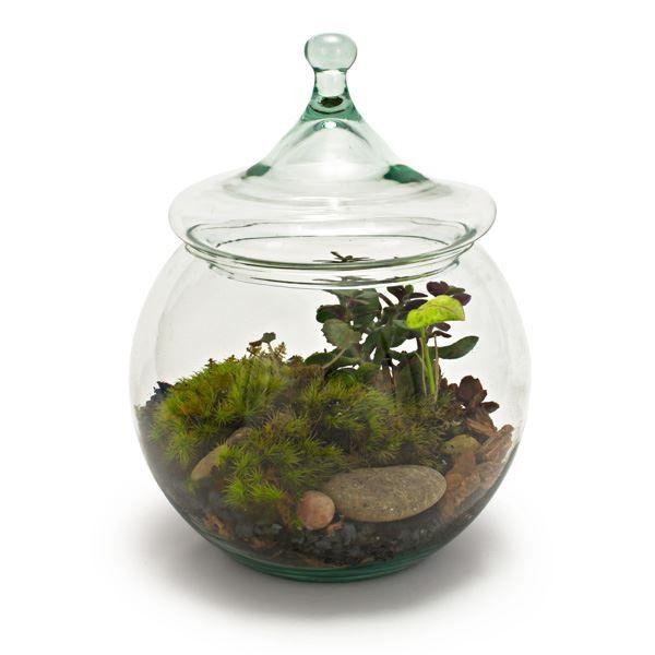 """Recycled Glass Garden Terrarium 8"""" (491563215), Hidden Product ReviewGlasses Gardens, Recycled Glass, Terrariums Kits, Tabletop Terrariums, Flower Gardens, Recycle Glasses, Glass Garden, Gardens Terrariums"""