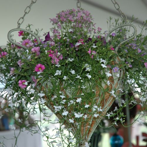 Don't Make This Common Mistake When Choosing a Plant for a Hanging Basket