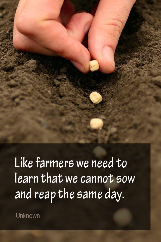 Daily Quotation for May 31, 2015 #quote #quoteoftheday Like farmers we need to learn that we cannot sow and reap the same day. - Unknown