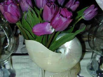Seashell Wedding Ideas