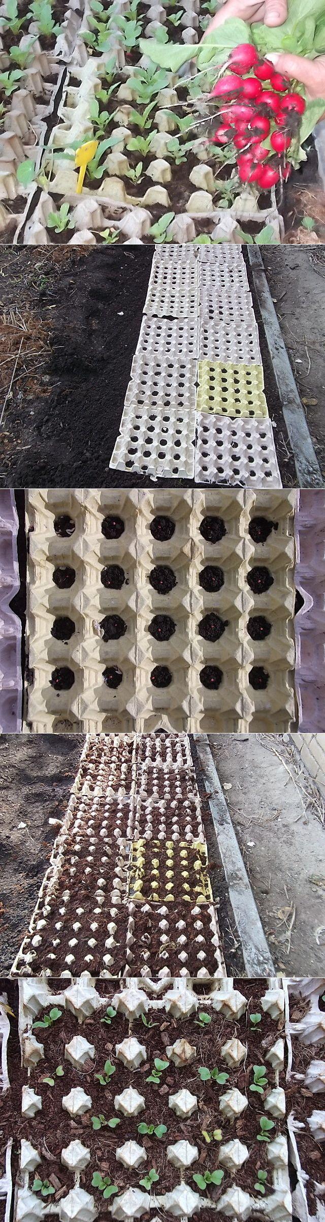 Вдавить кассеты с проделанными отверстиями в почву, заложить семена, присыпать, полить. Далее только полив, без прополки и мульчирования