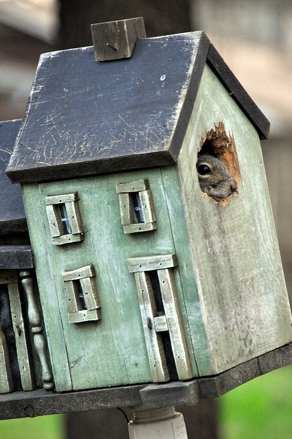 Shabby squirrel hut!
