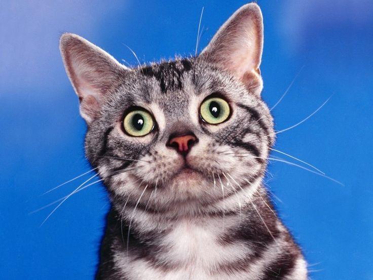 картинка смешные морды кошек перечисляются те, чья